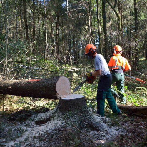 Arbeitssicherheit AS Baum 1 für den Fachmann: