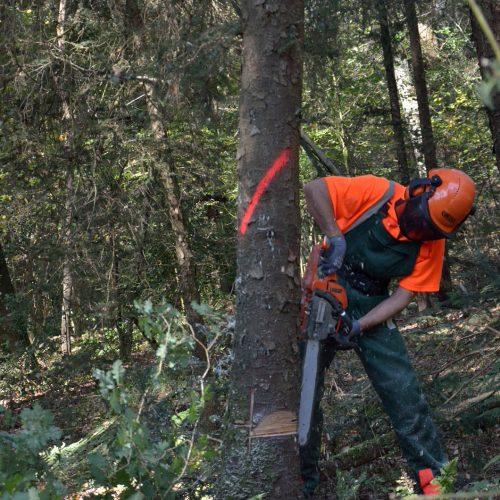 Fällen und Entasten von Bäumen